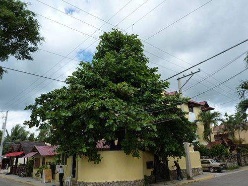Отель, гостиница в Кабарете, Доминиканская Республика, 820 м2 - фото 6
