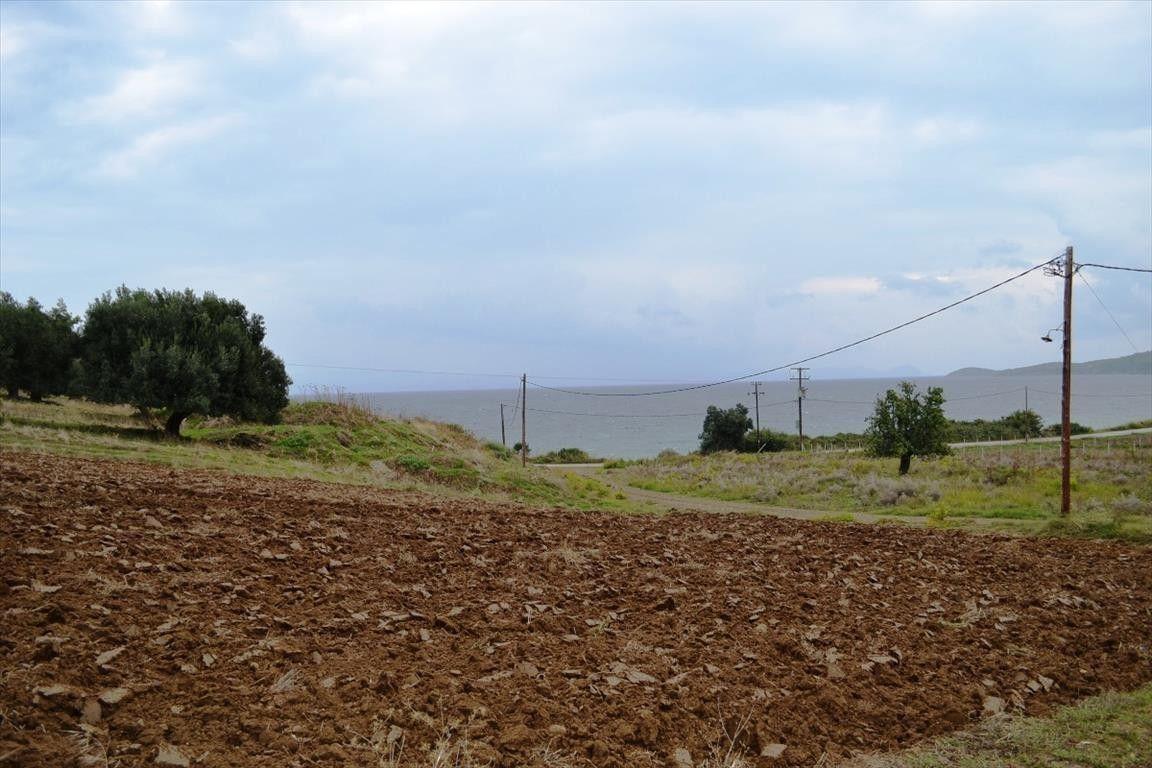 Земля Халкидики-Кассандра, Греция, 8404 сот. - фото 1