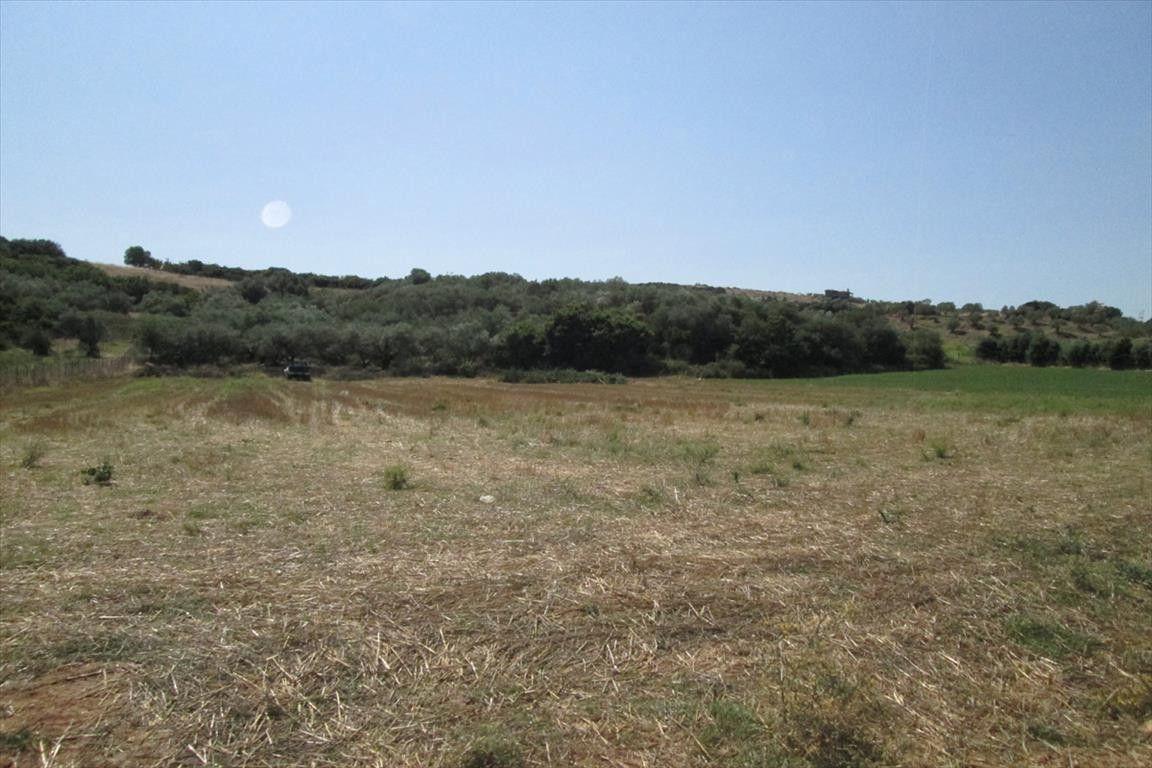 Земля Халкидики-Афон, Греция, 4718 сот. - фото 1