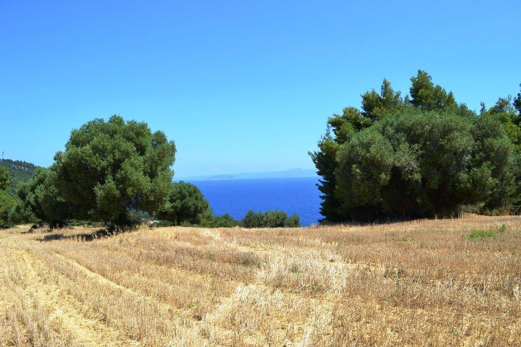 Земля Халкидики-Кассандра, Греция, 9800 сот. - фото 1
