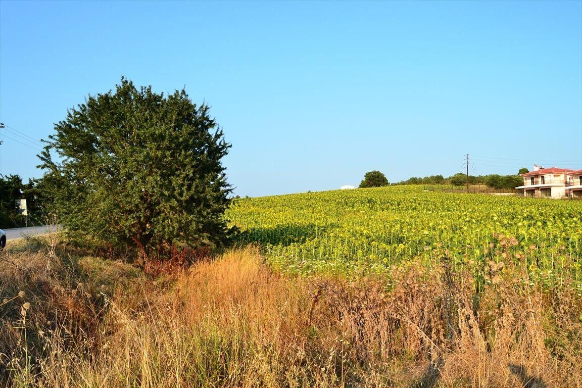 Земля Халкидики-Кассандра, Греция, 6667 сот. - фото 1