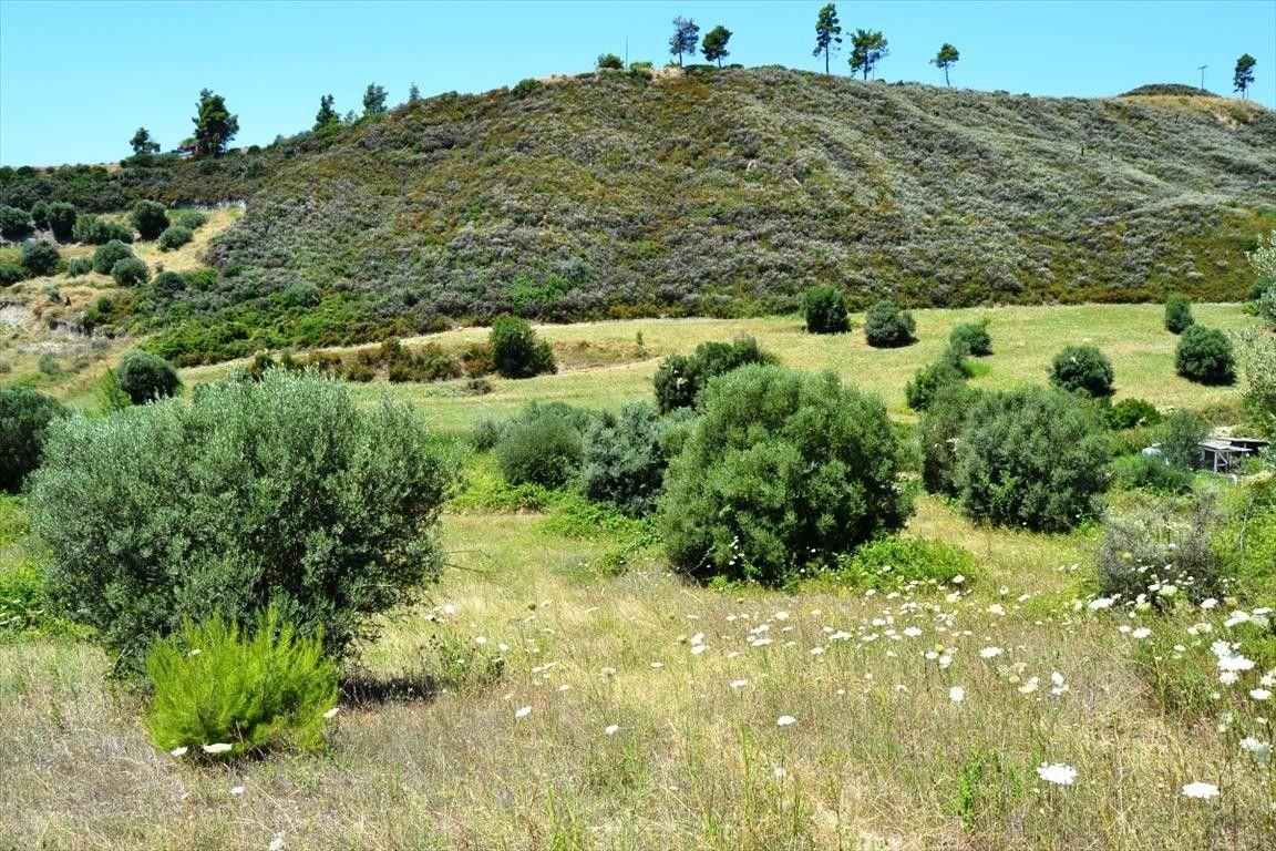 Земля Халкидики-Кассандра, Греция, 8000 сот. - фото 1