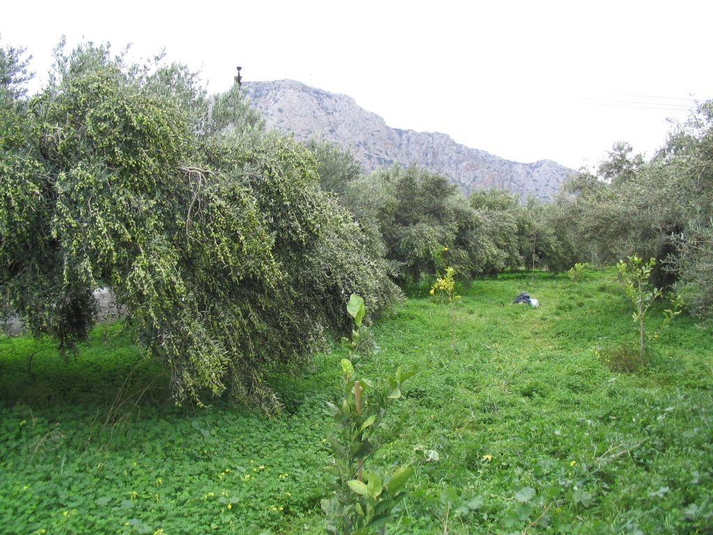 Коттедж о. Крит, Греция, 3070 сот. - фото 1