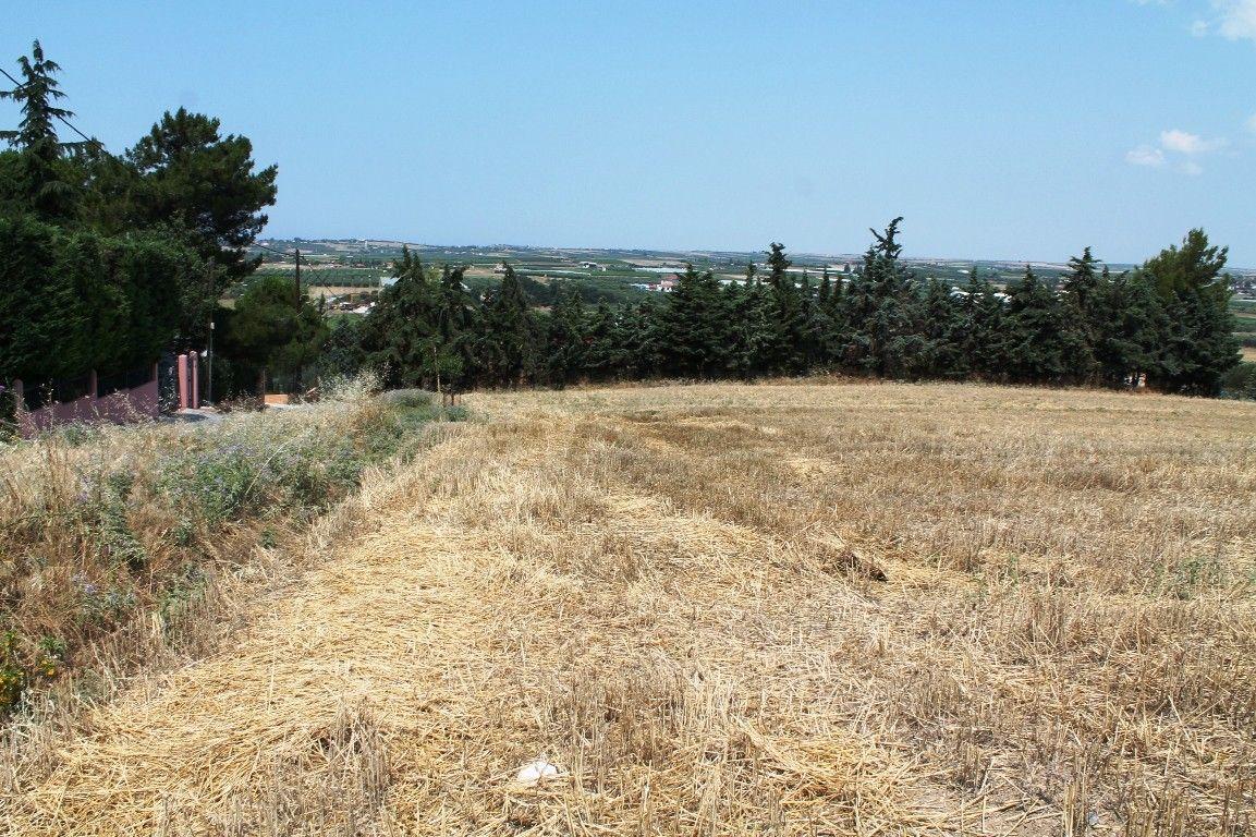 Земля Халкидики-Другое, Греция, 7000 сот. - фото 1