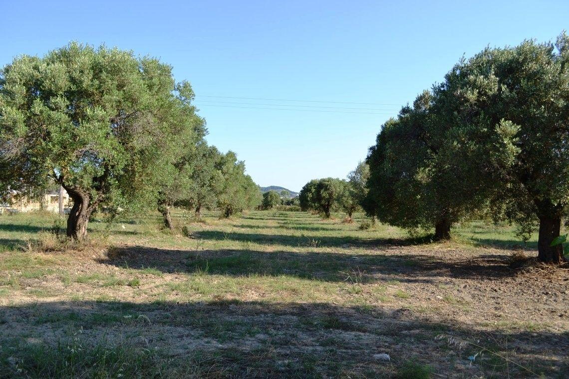 Земля Халкидики-Кассандра, Греция, 7800 сот. - фото 1