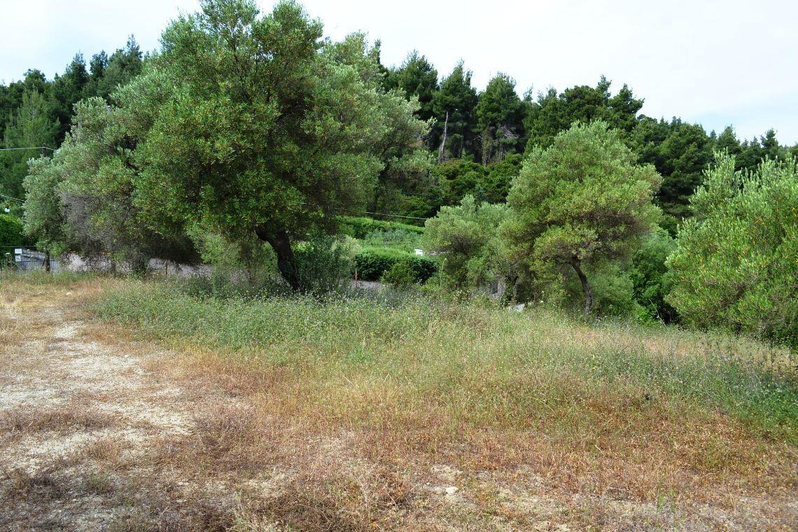 Земля Халкидики-Кассандра, Греция, 6900 сот. - фото 1