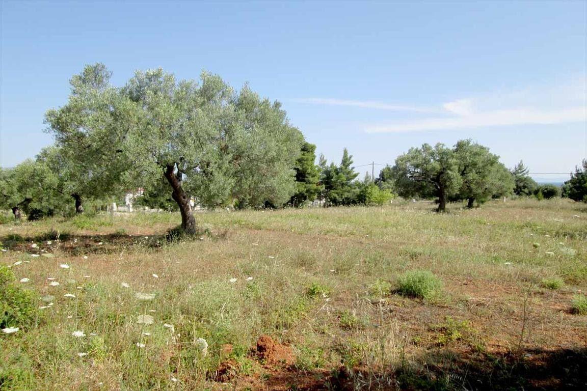 Земля Халкидики-Ситония, Греция, 6000 сот. - фото 1
