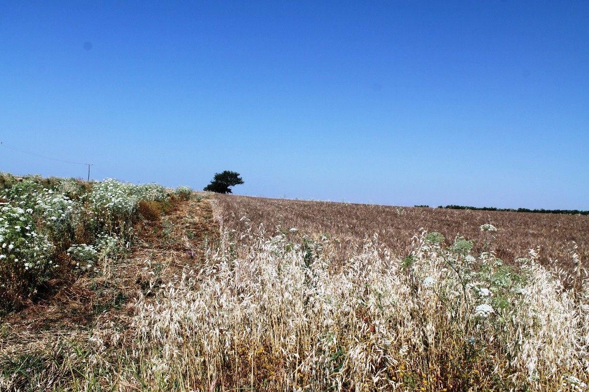 Земля Халкидики-Другое, Греция, 5250 сот. - фото 1