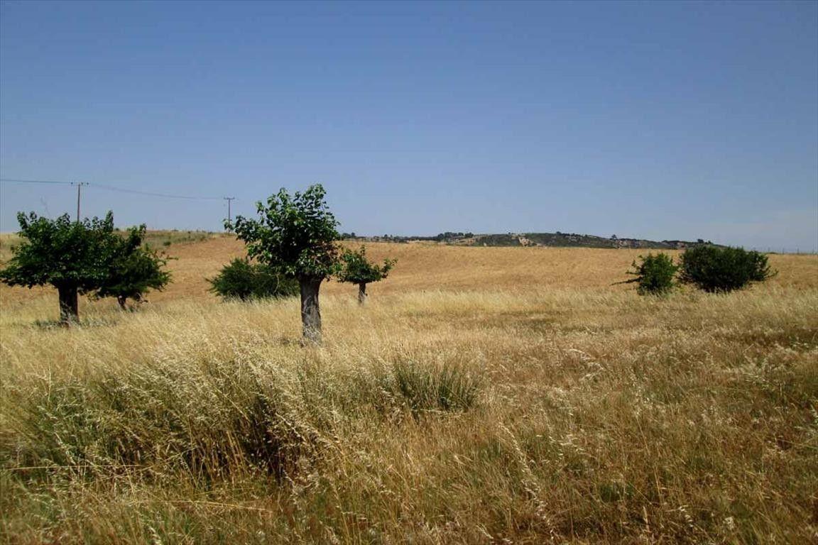 Земля Халкидики-Ситония, Греция, 5777 сот. - фото 1