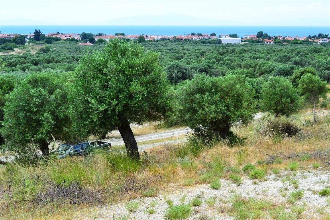 Земля Халкидики-Кассандра, Греция, 9400 сот. - фото 1