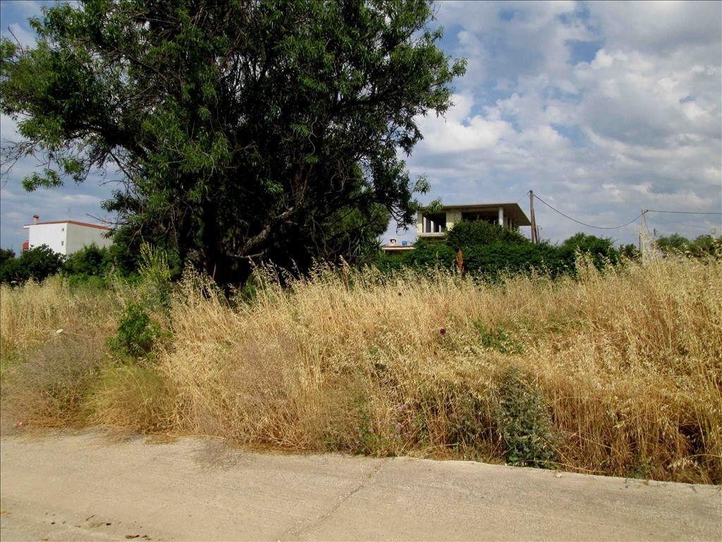 Земля Халкидики-Ситония, Греция, 410 сот. - фото 1