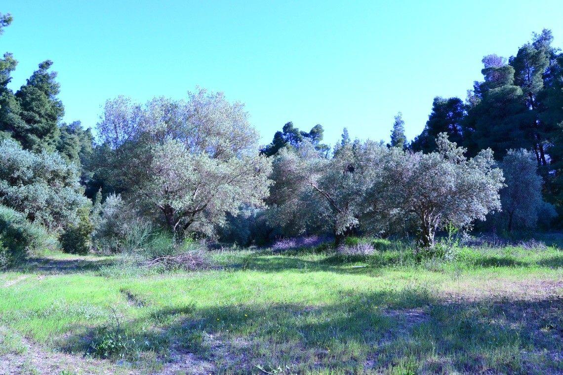 Земля Халкидики-Кассандра, Греция, 2500 сот. - фото 1