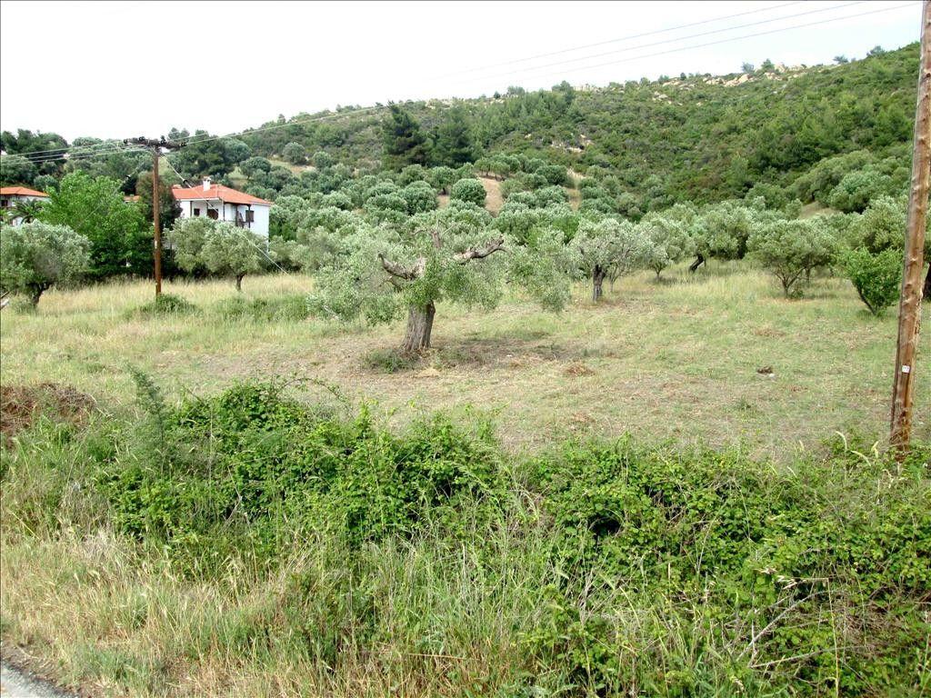 Земля Халкидики-Ситония, Греция, 2000 сот. - фото 1