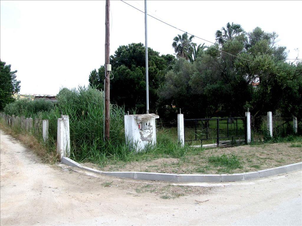 Земля Халкидики-Ситония, Греция, 680 сот. - фото 1