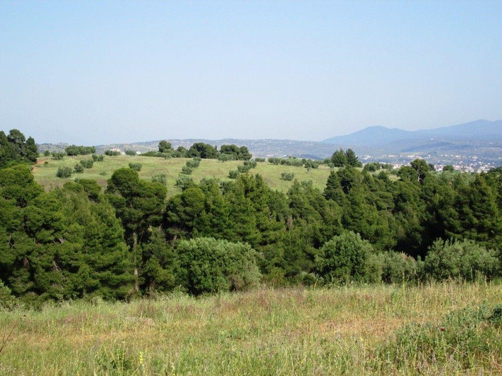 Земля Халкидики-Ситония, Греция, 3000 сот. - фото 1
