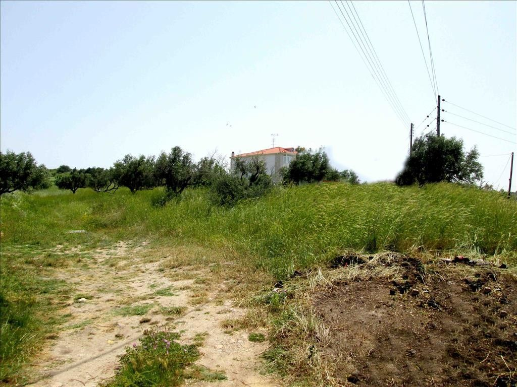 Земля Халкидики-Ситония, Греция, 3100 сот. - фото 1