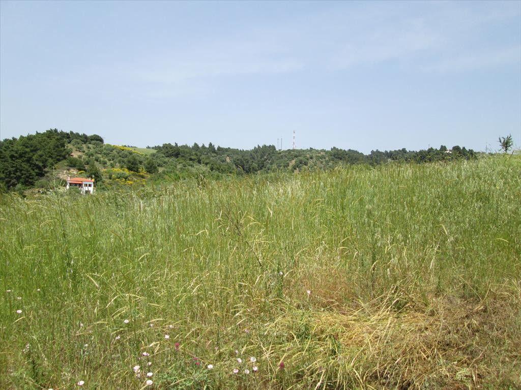 Земля Халкидики-Ситония, Греция, 1000 сот. - фото 1
