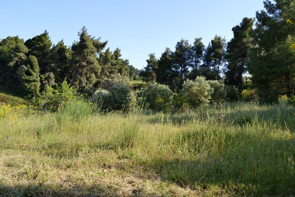 Земля Халкидики-Кассандра, Греция, 4178 сот. - фото 1