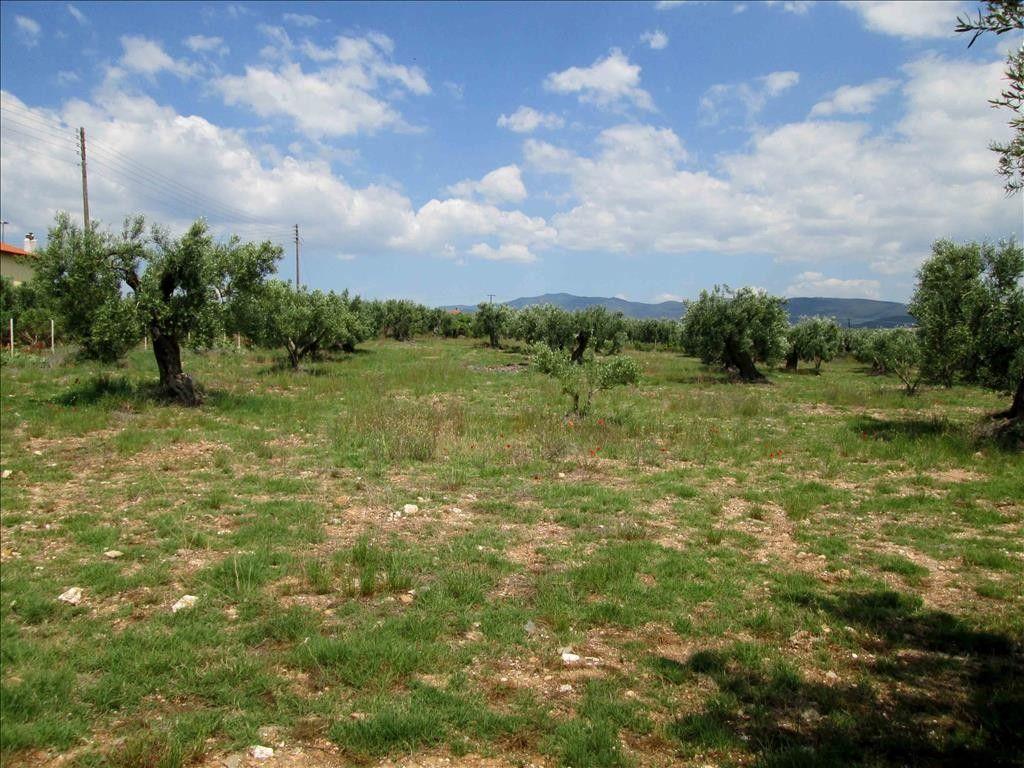 Земля Халкидики-Ситония, Греция, 5338 сот. - фото 1