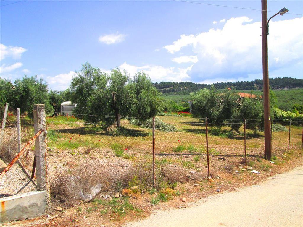 Земля Халкидики-Ситония, Греция, 4578 сот. - фото 1