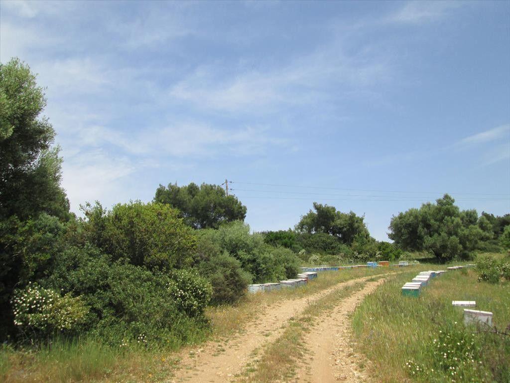 Земля Халкидики-Ситония, Греция, 4856 сот. - фото 1