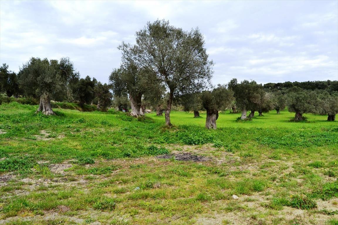 Земля Халкидики-Кассандра, Греция, 752 сот. - фото 1