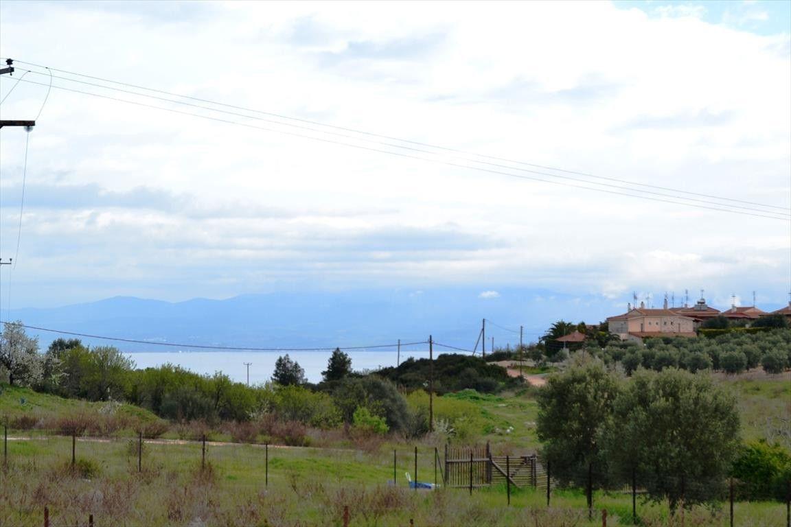 Земля Халкидики-Другое, Греция, 350 сот. - фото 1