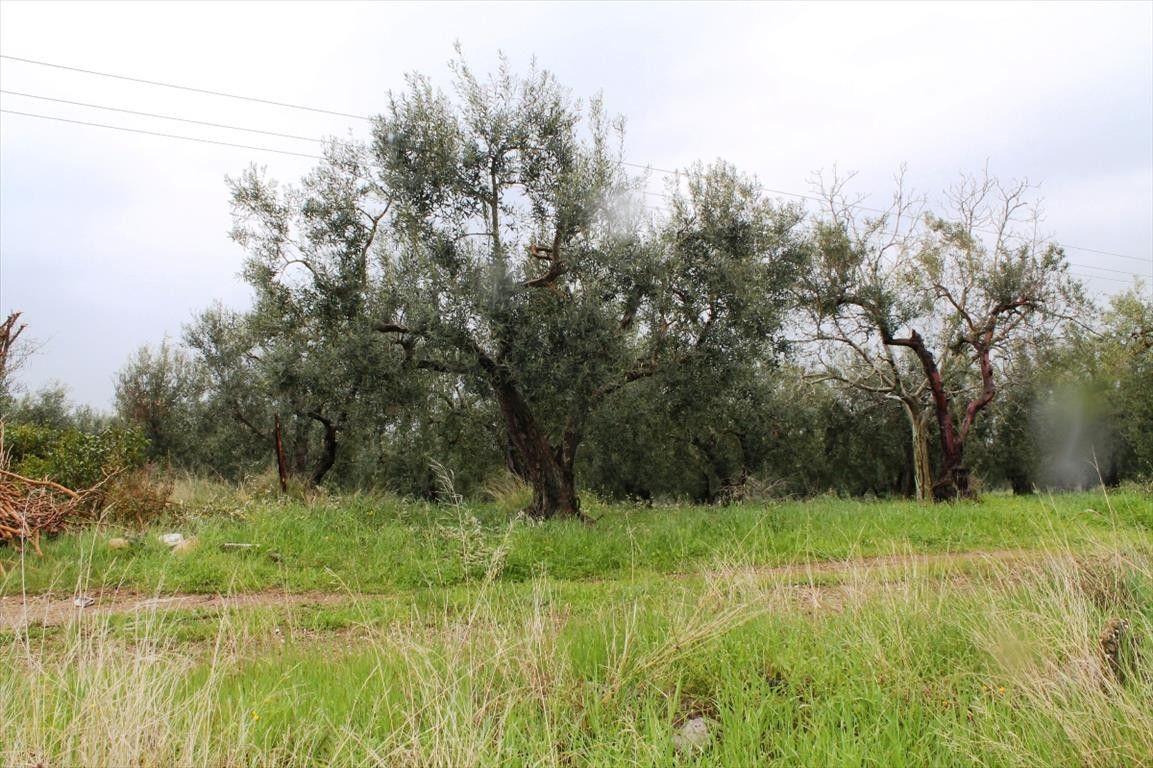 Земля Халкидики-Ситония, Греция, 6500 сот. - фото 1
