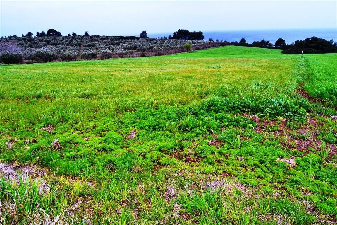 Земля Халкидики-Кассандра, Греция, 4500 сот. - фото 1