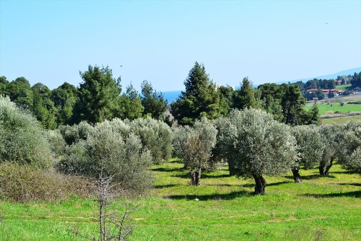 Земля Халкидики-Кассандра, Греция, 10800 сот. - фото 1