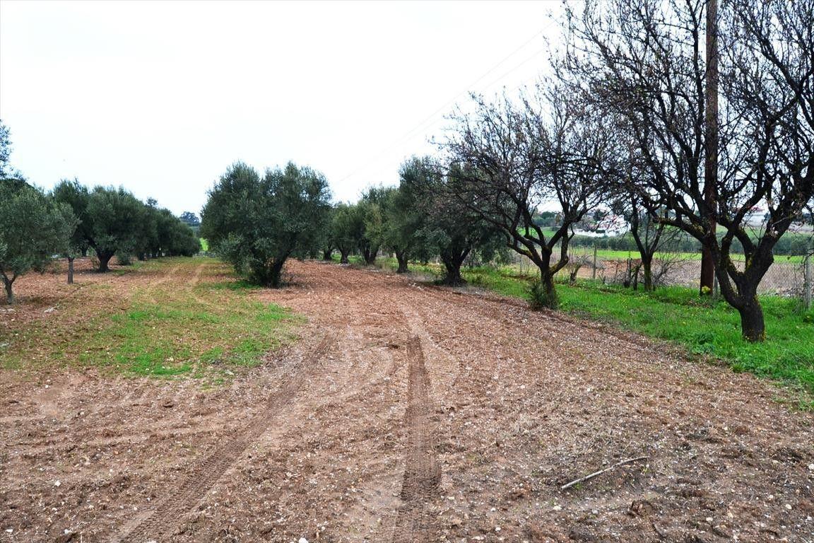 Земля Халкидики-Другое, Греция, 3068 сот. - фото 1