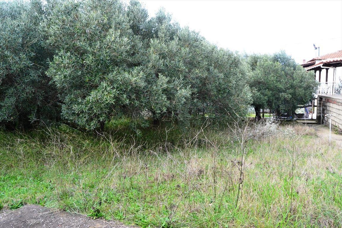 Земля Халкидики-Кассандра, Греция, 640 сот. - фото 1