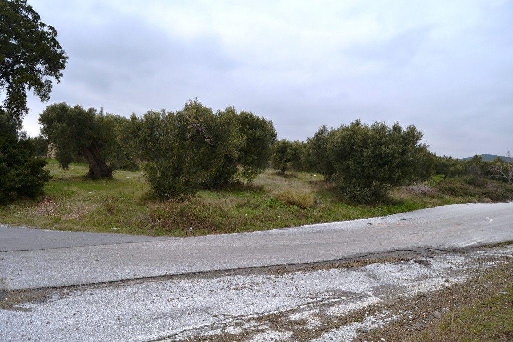 Земля Халкидики-Другое, Греция, 34000 сот. - фото 1
