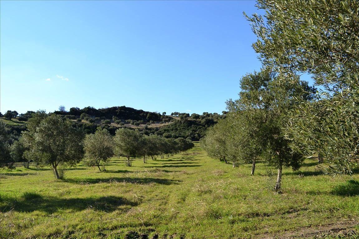 Земля Халкидики-Кассандра, Греция, 15000 сот. - фото 1