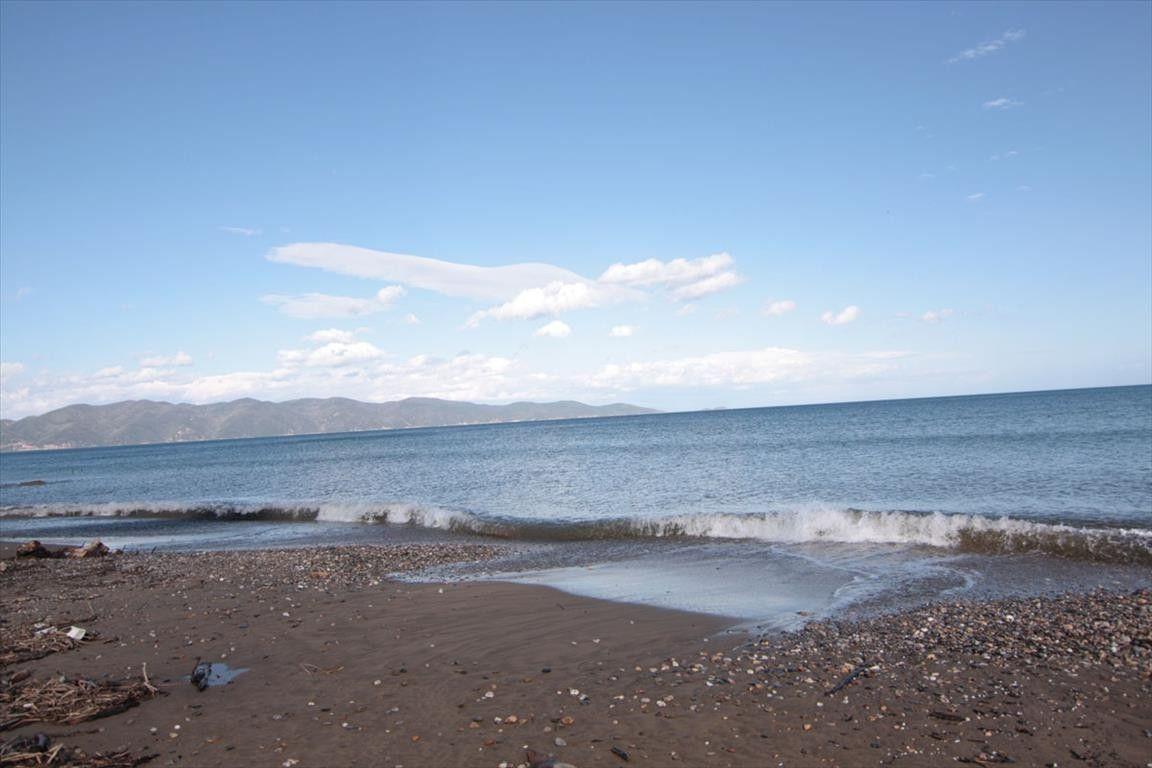 Земля Халкидики-Афон, Греция, 9288 сот. - фото 1