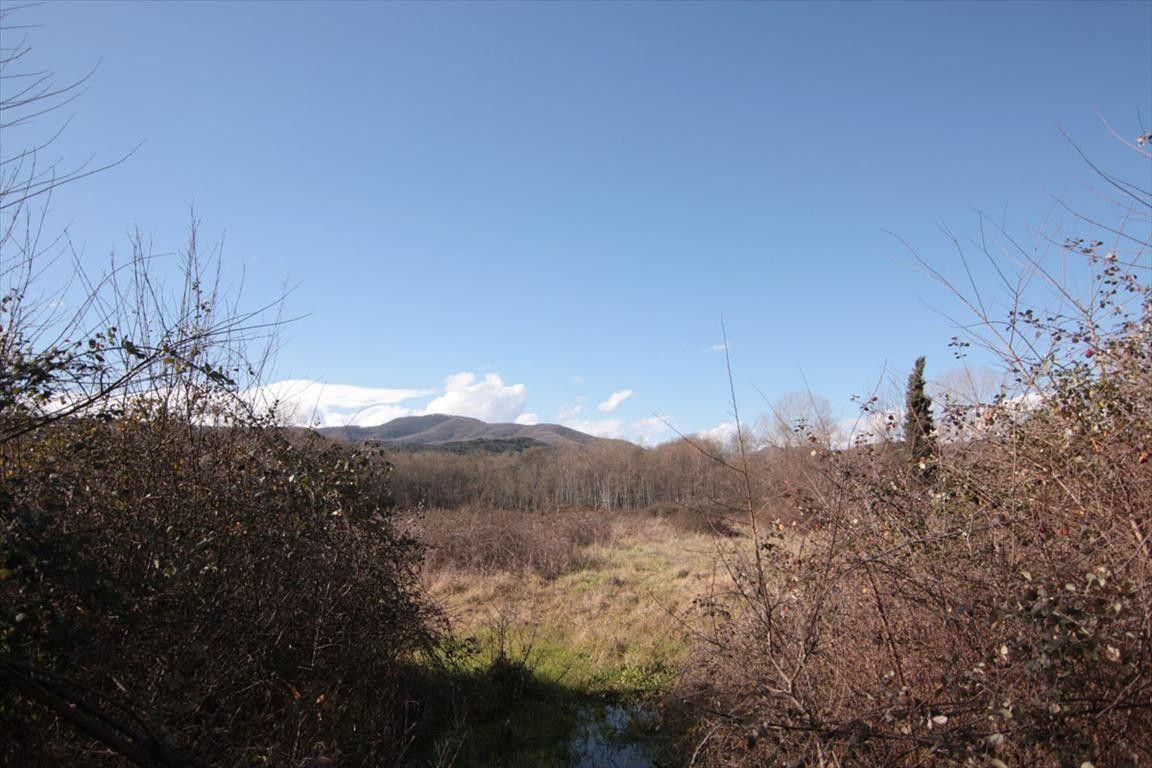 Земля Халкидики-Афон, Греция, 4500 сот. - фото 1