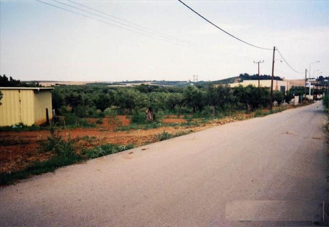 Земля Халкидики-Другое, Греция, 8400 сот. - фото 1