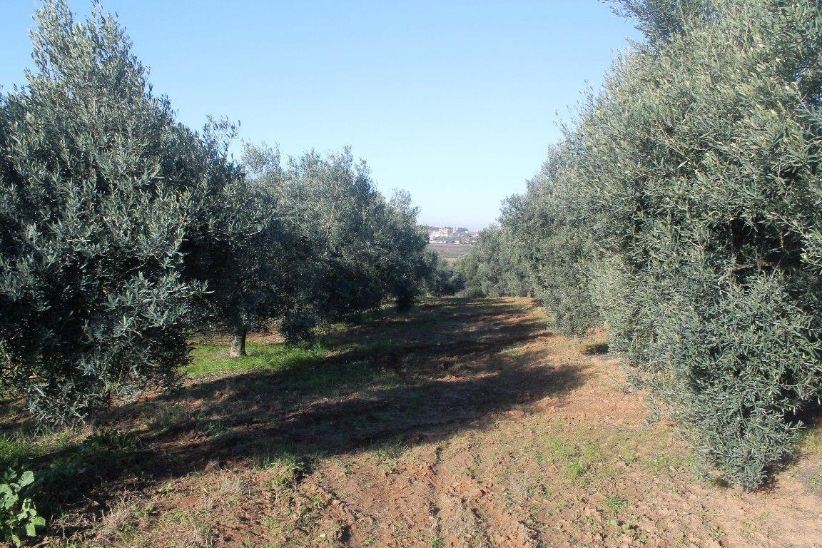 Земля Халкидики-Другое, Греция, 5300 сот. - фото 1