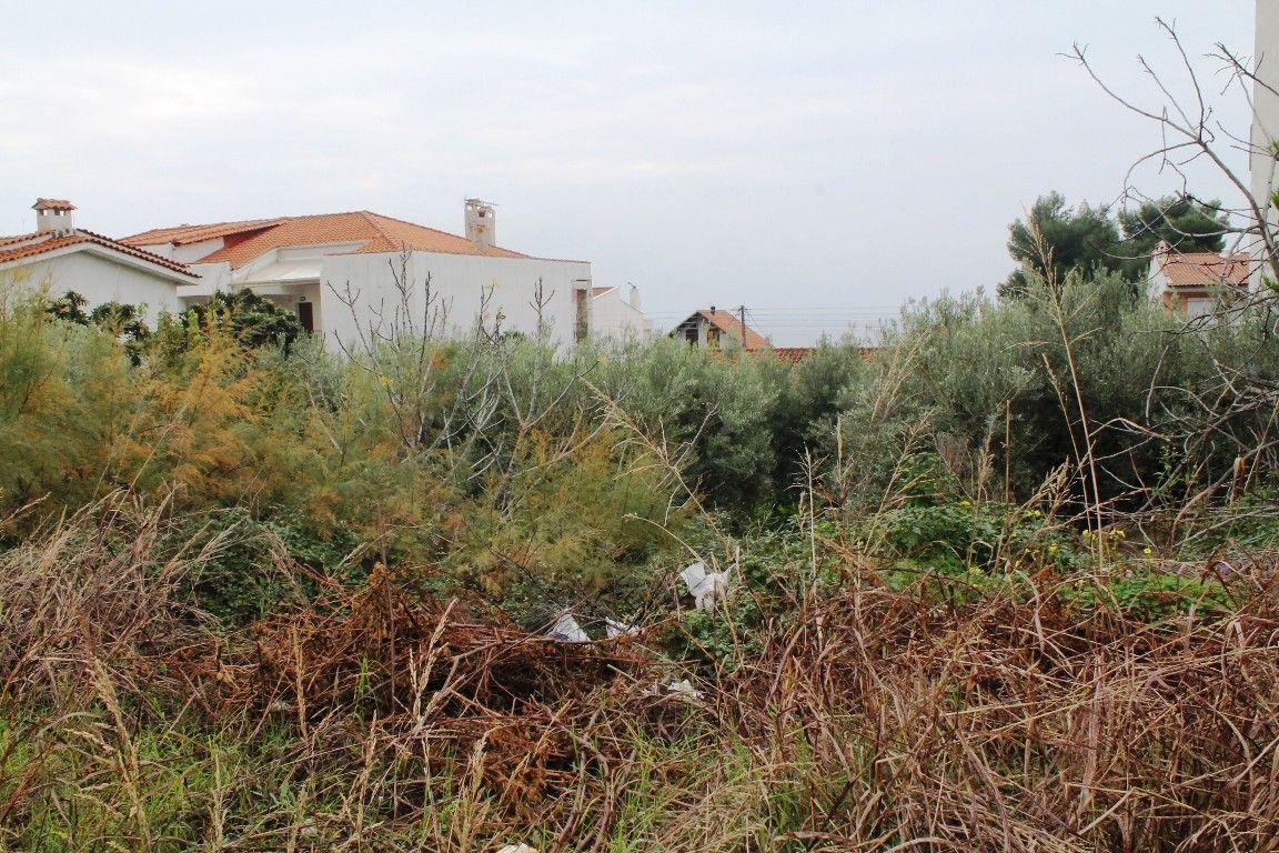 Земля Халкидики-Кассандра, Греция, 1106 сот. - фото 1