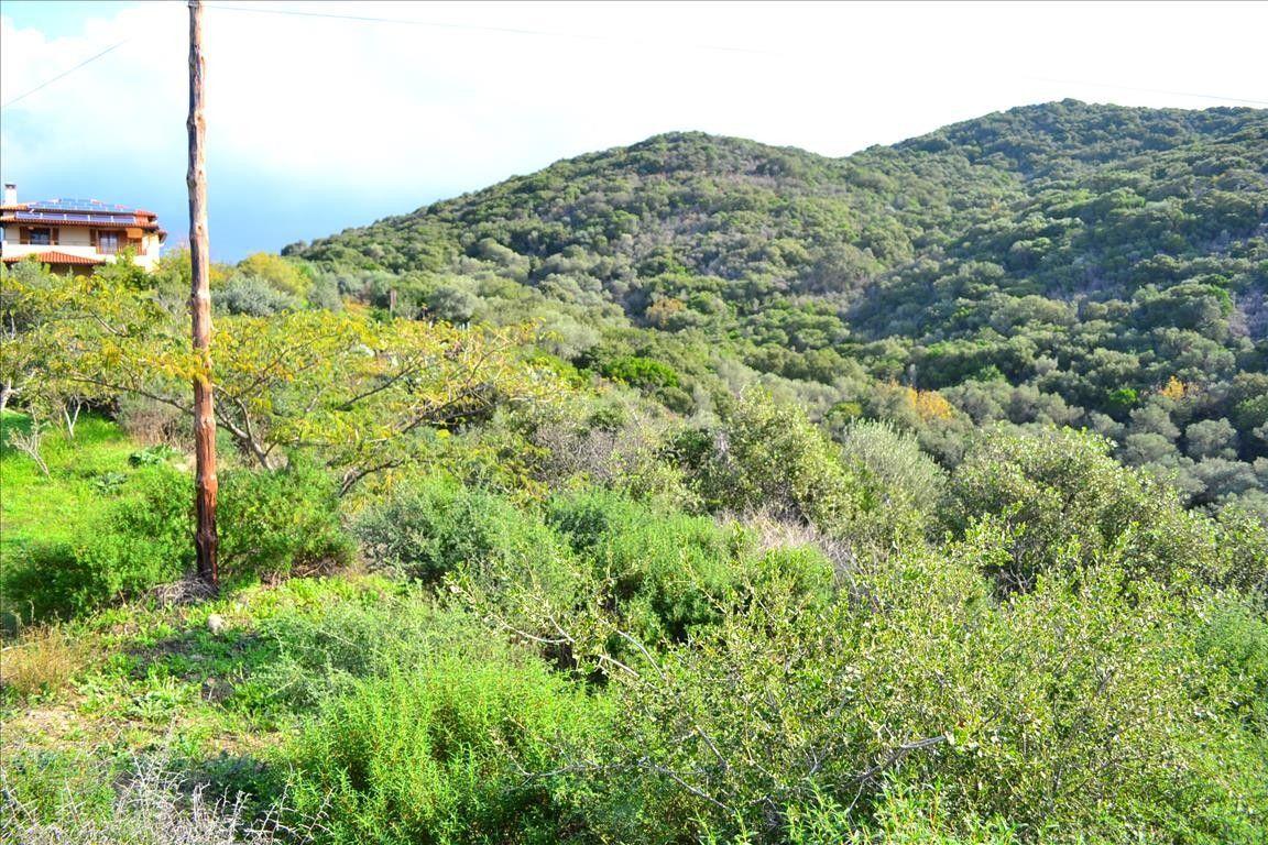 Земля Халкидики-Афон, Греция, 4622 сот. - фото 1