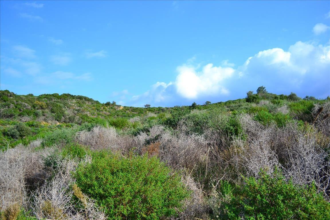 Земля Халкидики-Афон, Греция, 6750 сот. - фото 1
