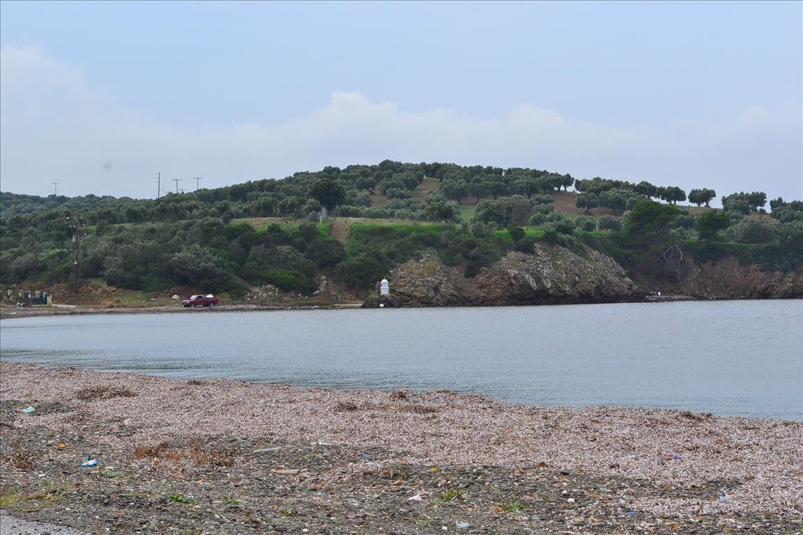 Земля Халкидики-Кассандра, Греция, 10000 сот. - фото 1