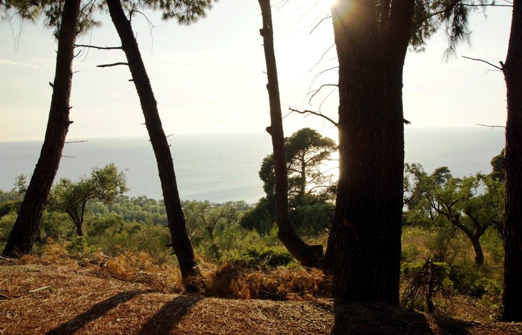 Земля Халкидики-Кассандра, Греция, 7700 сот. - фото 1