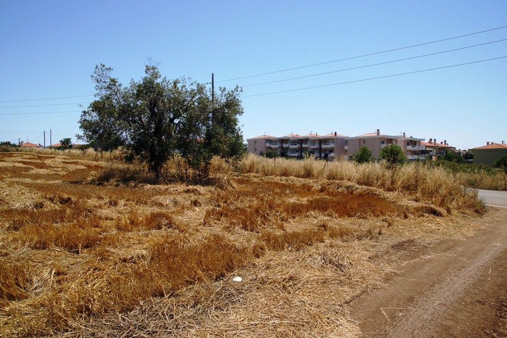 Земля Халкидики-Кассандра, Греция, 3200 сот. - фото 1
