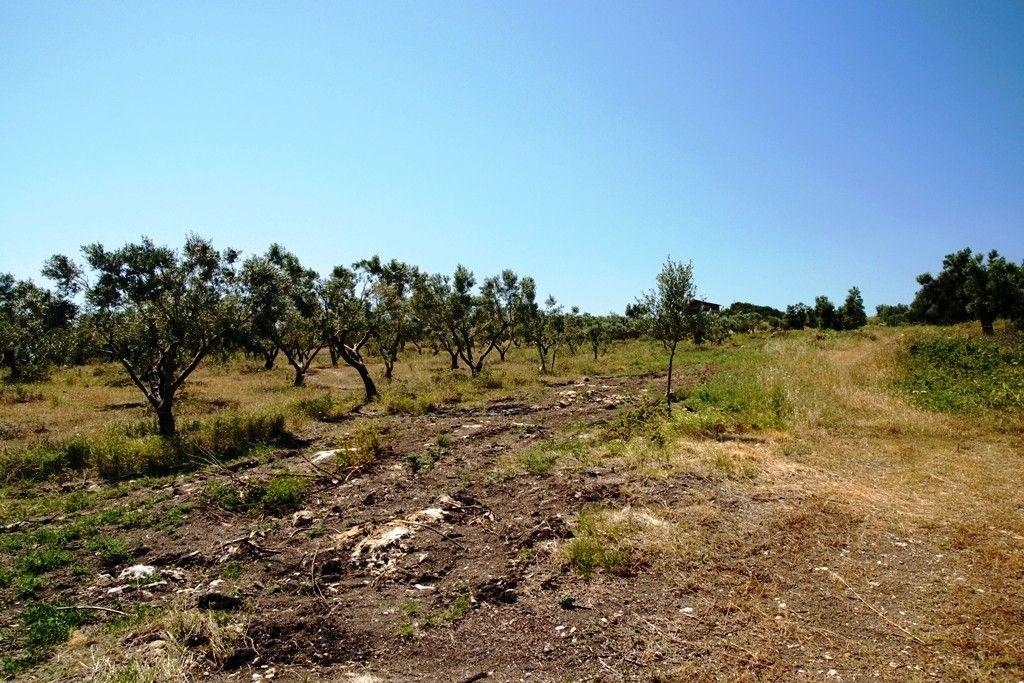Земля Халкидики-Ситония, Греция, 5000 сот. - фото 1