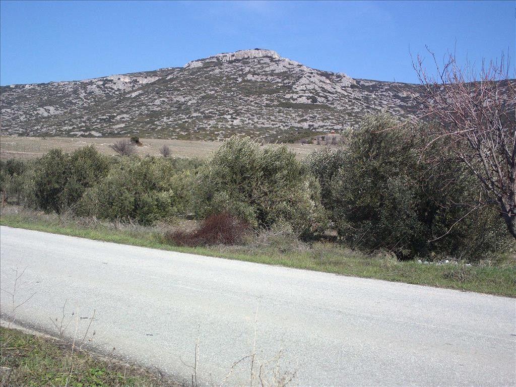 Земля Халкидики-Другое, Греция, 3250 сот. - фото 1