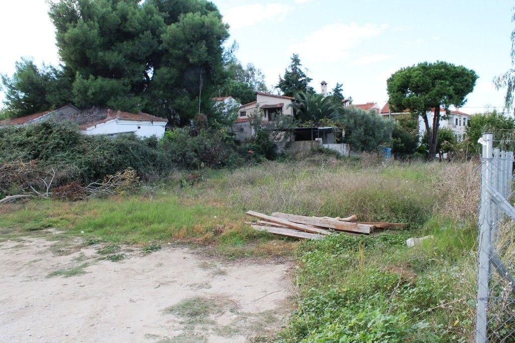 Земля Халкидики-Ситония, Греция, 450 сот. - фото 1