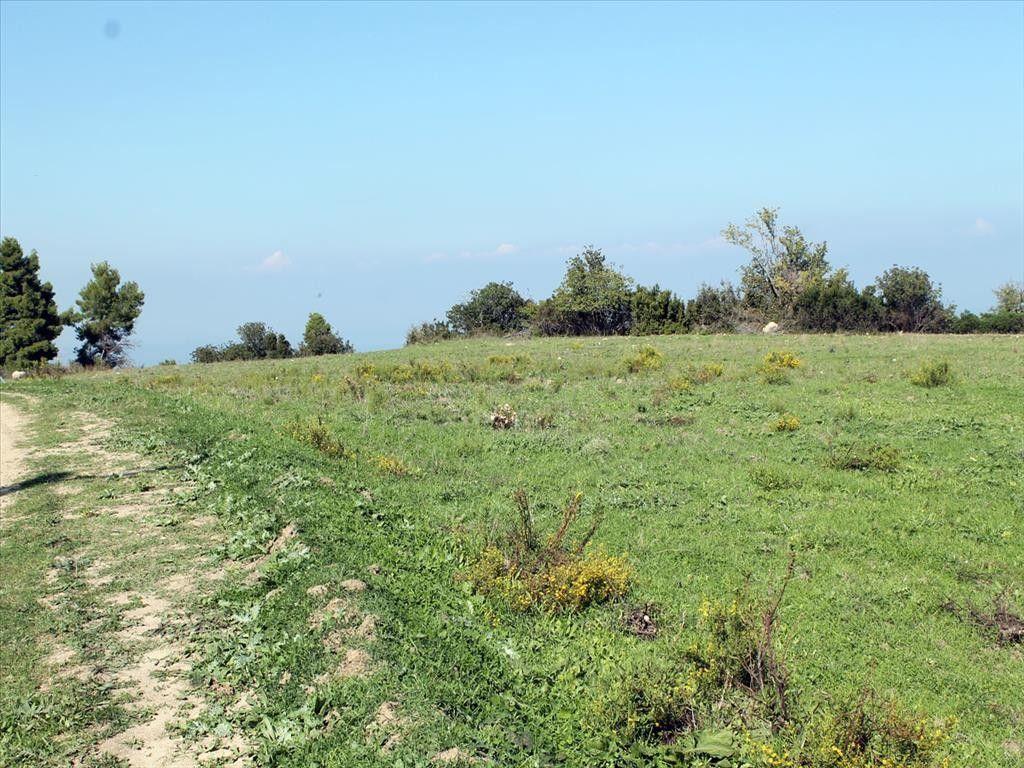 Земля Халкидики-Кассандра, Греция, 7000 сот. - фото 1