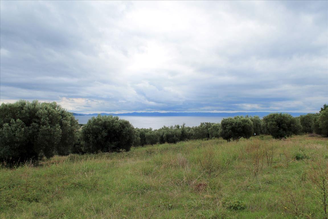 Земля Халкидики-Ситония, Греция, 16500 сот. - фото 1