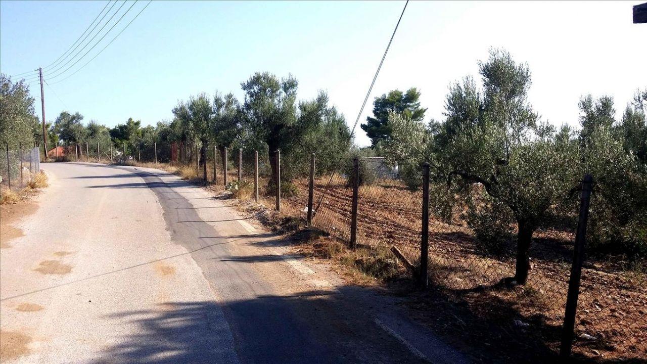 Земля Халкидики-Ситония, Греция, 3074 сот. - фото 1